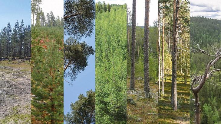 Kuvakollaasi metsätyypeistä