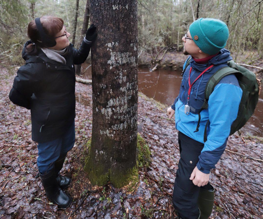 Maarit Kaukonen ja Tuomas Kallio tutkivat haapaa